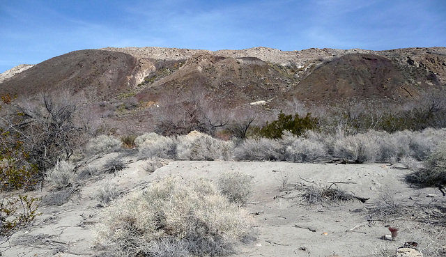 Lower Vine Ranch - Pond Embankment (3426)