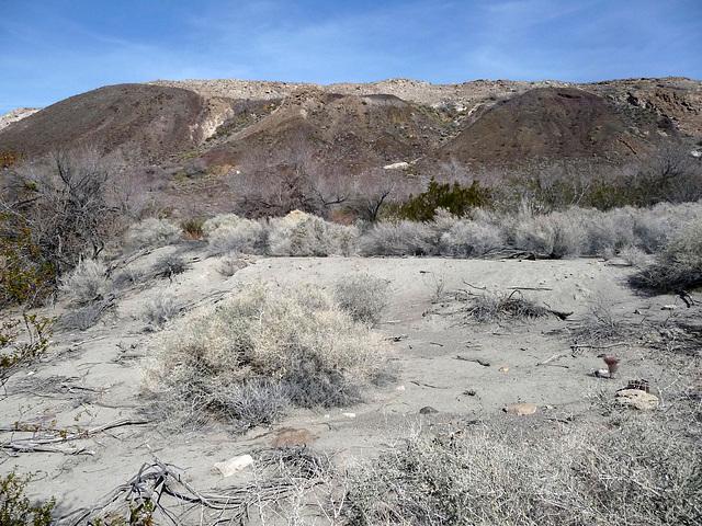 Lower Vine Ranch - Pond Embankment (3427)