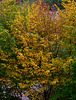 Herbst / Fall