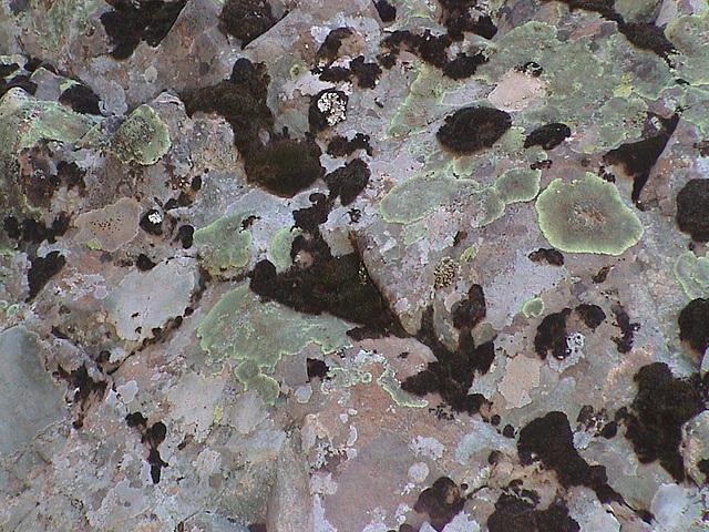 Flechten auf Stein