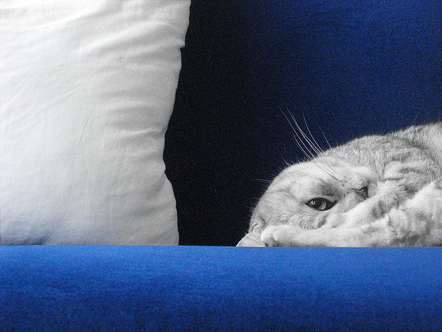 Grey cat on blue sofa with cushion