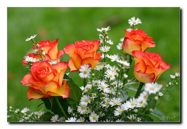 *Rosen für Steffi*