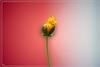 Eine letzte Blüte...
