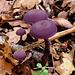 I love fungi!