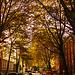 Straße im Herbstlicht