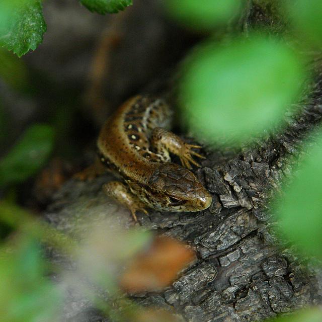 Bavarian Wildlife, Part Three