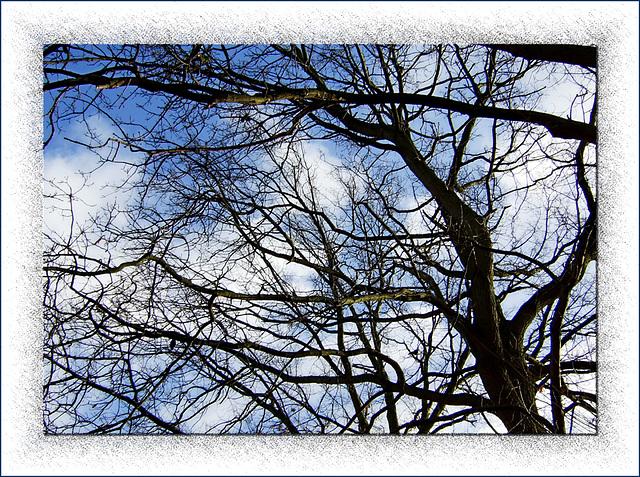 *Frosty Blue Sky*