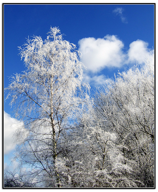 *Frost*