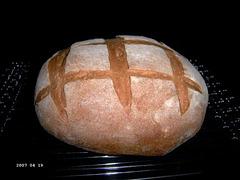 Basic Whole Wheat Bread 1