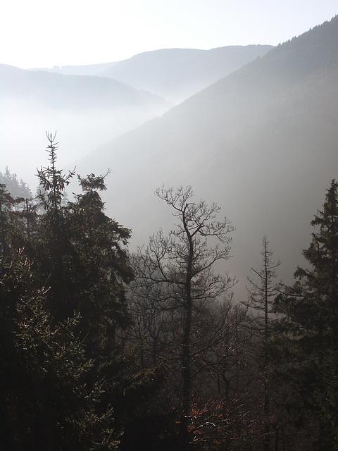 oberhalb des Rammelberges bei Goslar führt der Borchersweg bergan / Dust at 0 degree Celsius
