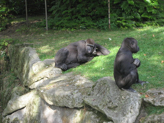 Berlin, Zoologischer Garten, gorilla thinker (4)