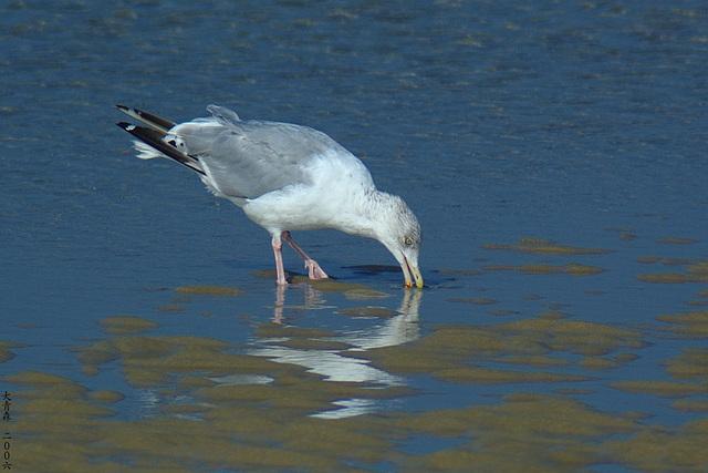Seagull 2