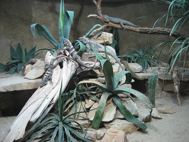 Berlin, Zoologischer Garten (2)