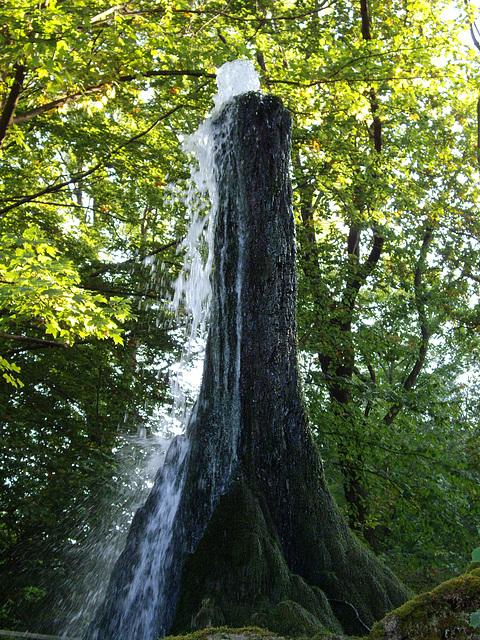 Der Wasserbaum von Ockensen