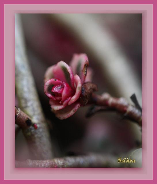 macro de fleur de rocaille !!!