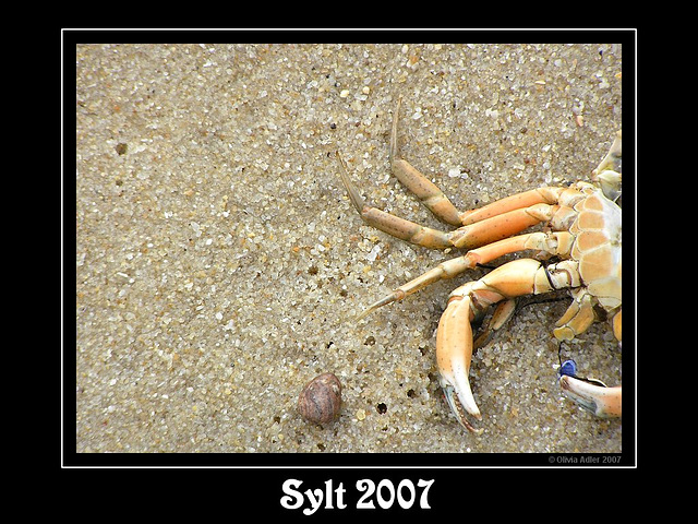 Ich war eine Krabbe