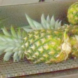 HOW TO CHOOSE A PINEAPPLE