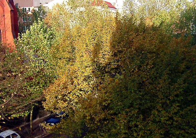 Autumn / Herbst