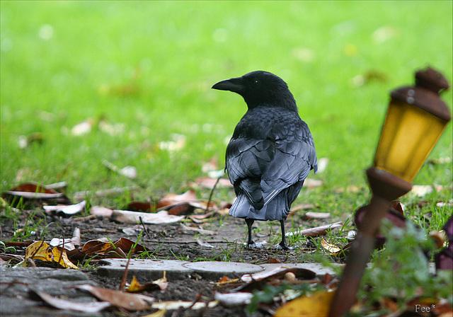 *Birdwalk*
