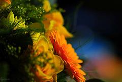 gute Laune Blumen