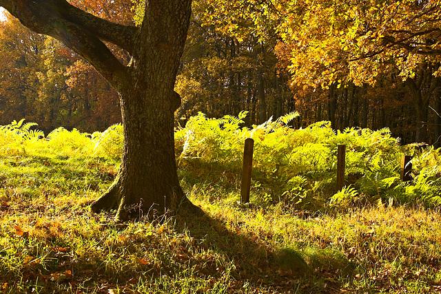 Herbstwald | Autumnal forest