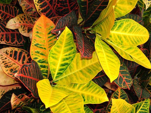 botanical-081