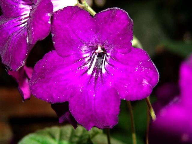botanical-084