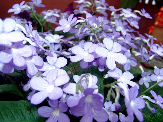 botanical-085