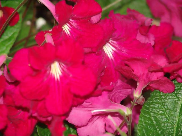 botanical-087