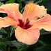 botanical-091
