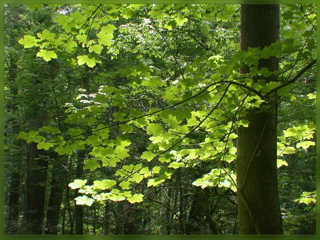 Das Licht des Waldes