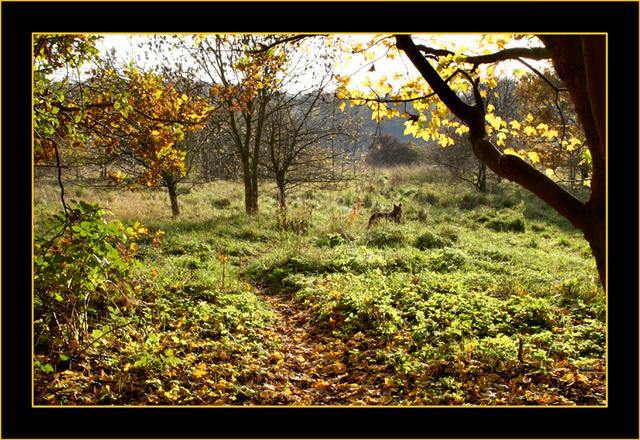 Das goldene Licht des Herbstes.