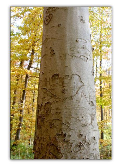 Old tree...seems like a storyteller