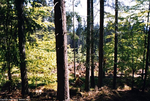 Sumava Hike, Picture 3, Sumavsky Narodni Pamatka, Bohemia(CZ), 2007