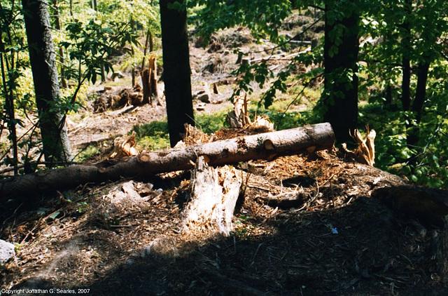 Sumava Hike, Picture 6, Sumavsky Narodni Pamatka, Budejovicky Kraj, Bohemia(CZ), 2007