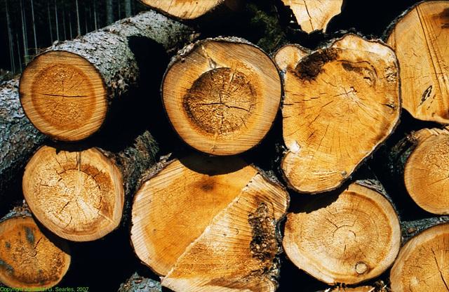 Logs In Sumavsky Narodni Pamatka, Picture 4, Budejovicky Kraj, Bohemia(CZ), 2007