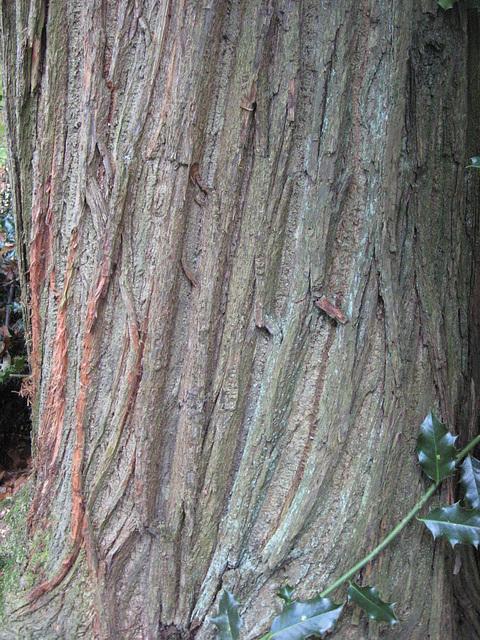 Hatchards tree