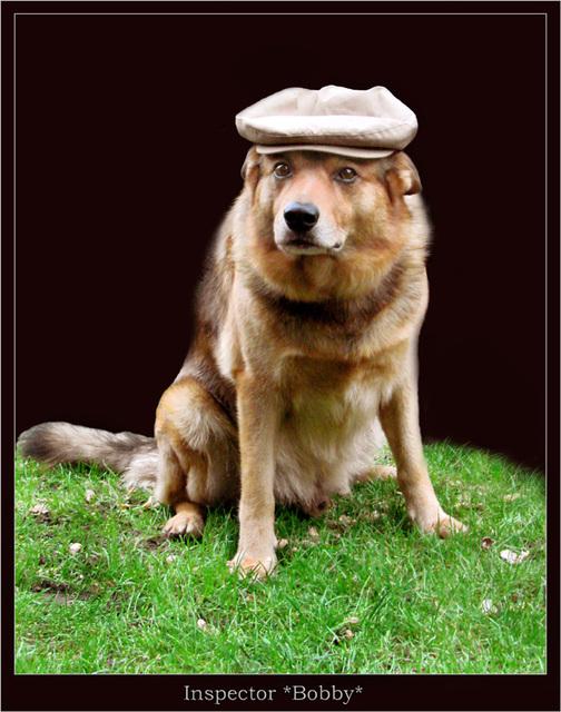 """Mein """"Schnüffeltier"""""""