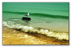 A sea gull ..