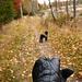 1 / 7 - 070929 - Saturday - walking the dog