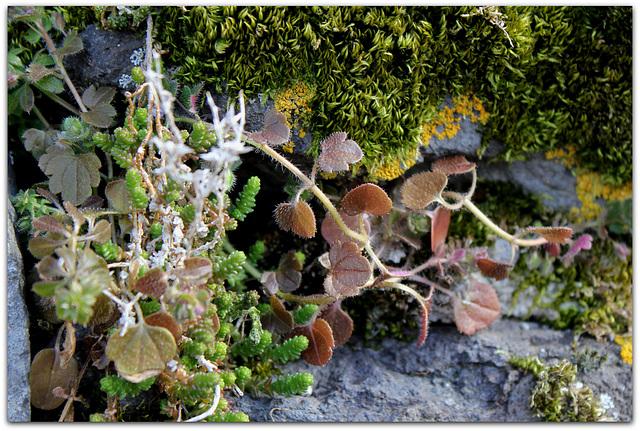 Petites plantes de mur