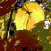 sunlight leaves