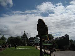 Algarve, Albufeira, Zoomarine, bird of prey show