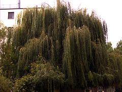 Ein Baum ;-)