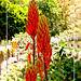 Flor del Aloe