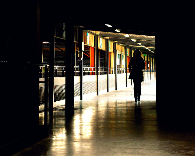 elsa in the light
