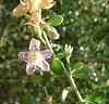 Flower (3023)
