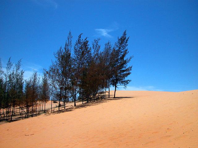 Bình Thuận Dunes, Vietnam