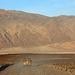 Death Valley (9770)