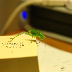 Grasshopper On My Trail